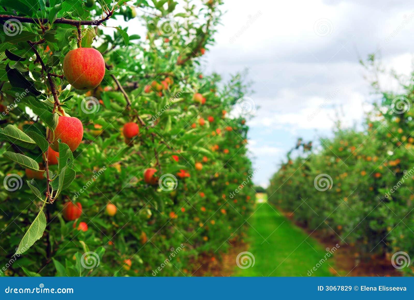 οπωρώνας μήλων