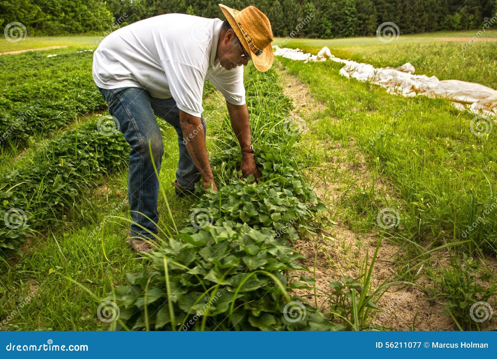 Οργανικός αγρότης