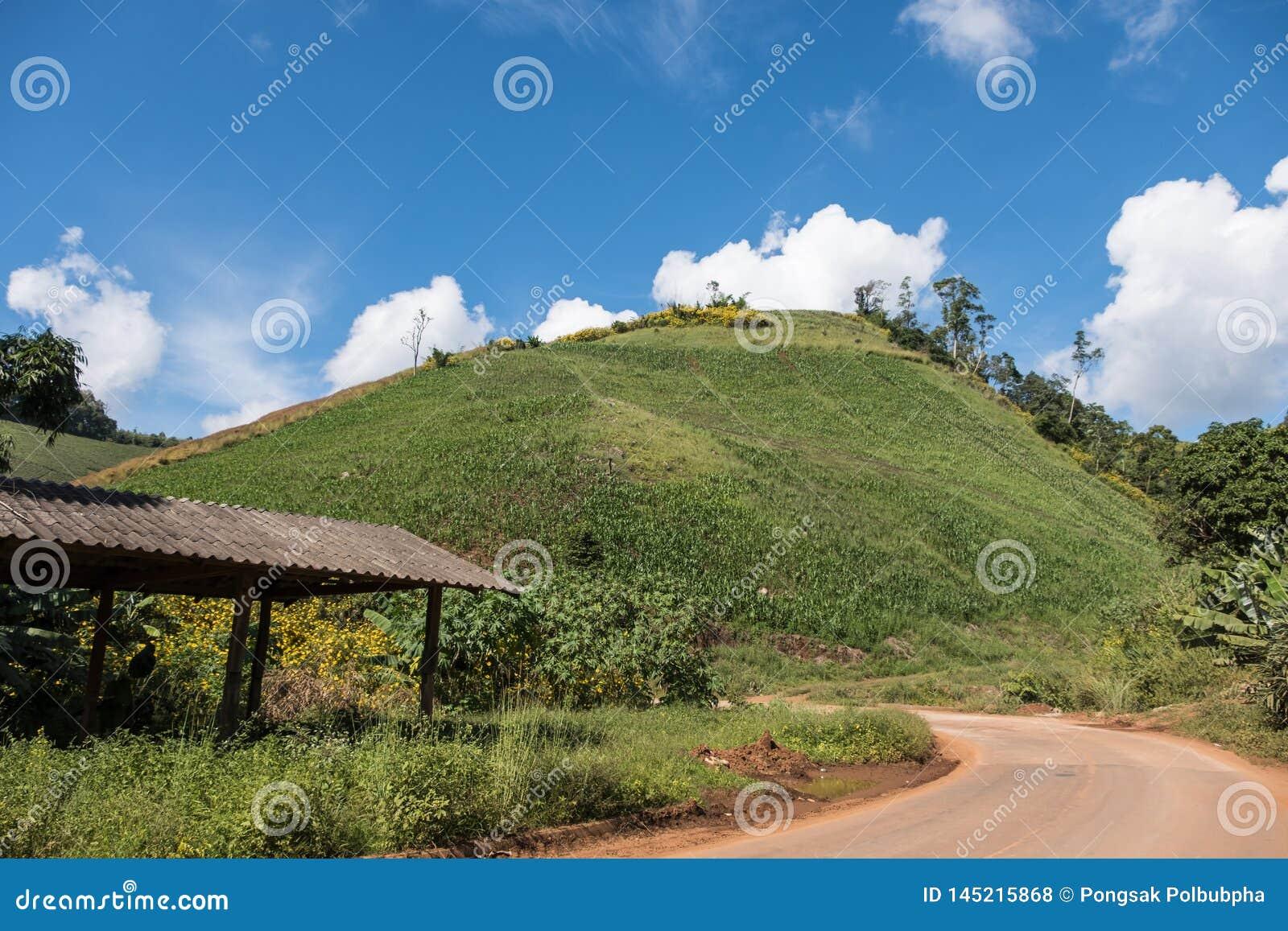 Οργανικός κήπος καλαμποκιού στο λόφο κλίσεων