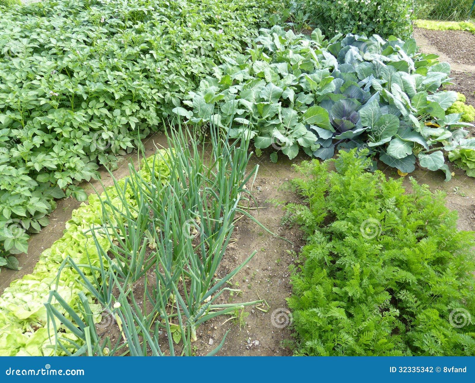 Οργανικός κήπος