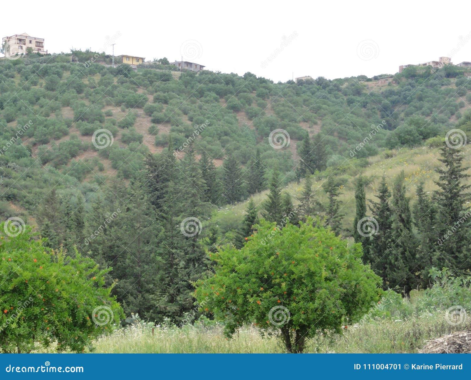 Ορεινό τοπίο στα βουνά Kabylia - Kabyle