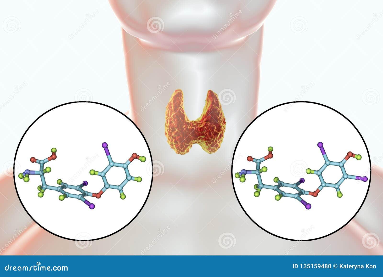 Ορμόνες του θυροειδούς αδένα T3 και T4