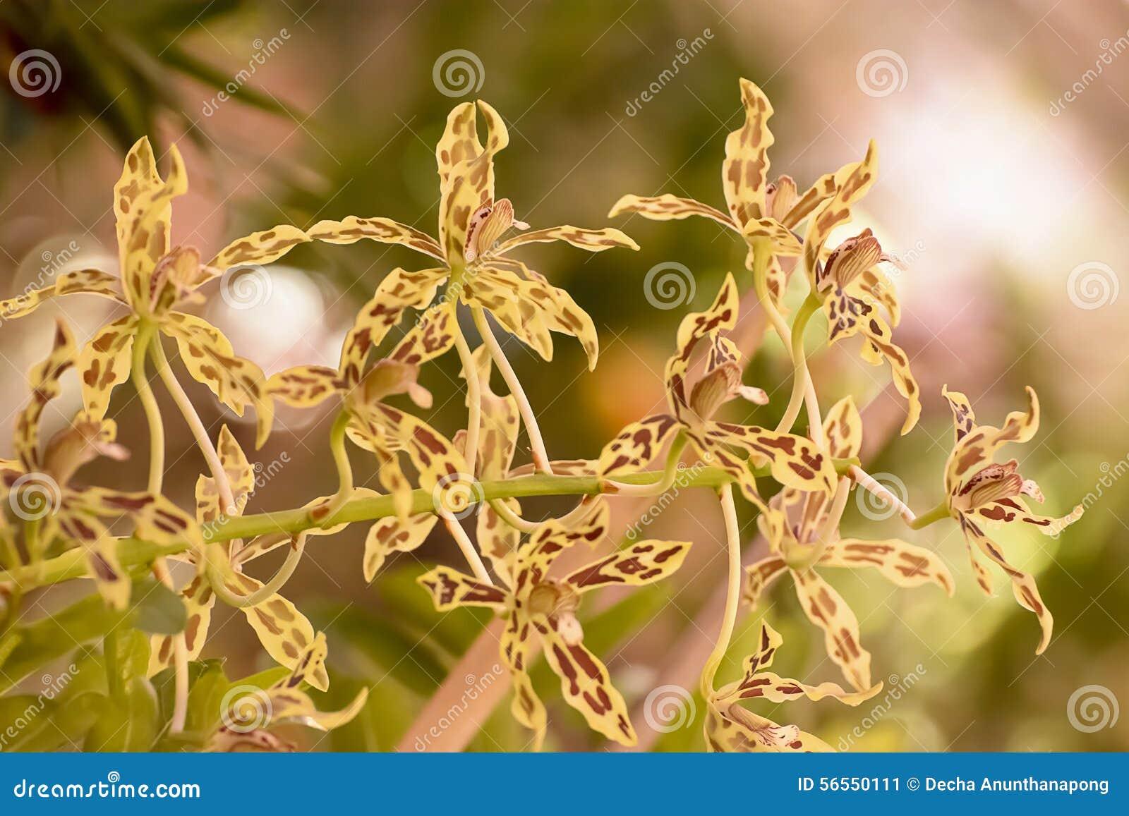 Download Ορχιδέα στοκ εικόνα. εικόνα από είναι, φυτά, αυτό, ανεμοδαρμένη - 56550111