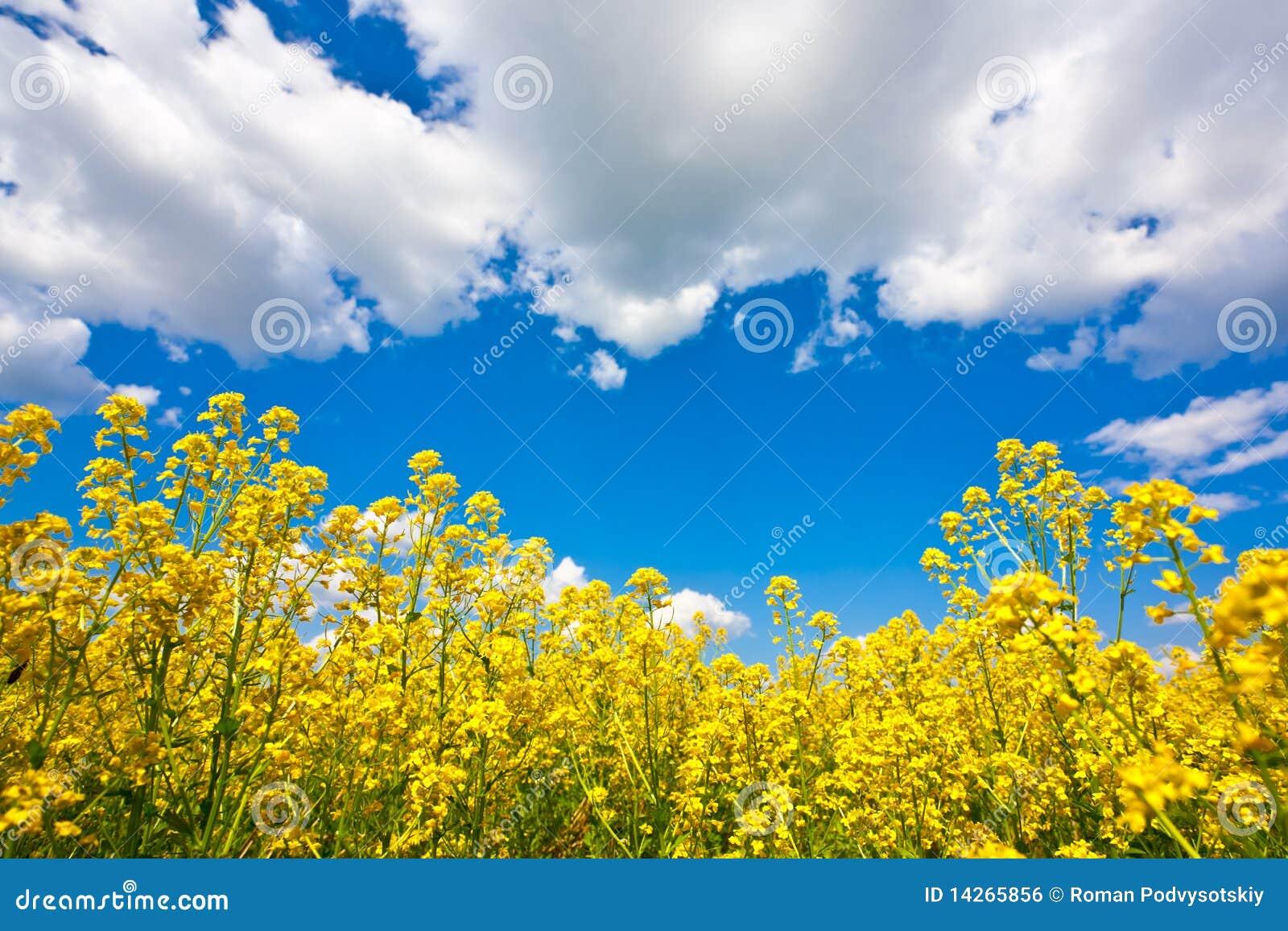 ουρανός λουλουδιών πε&d