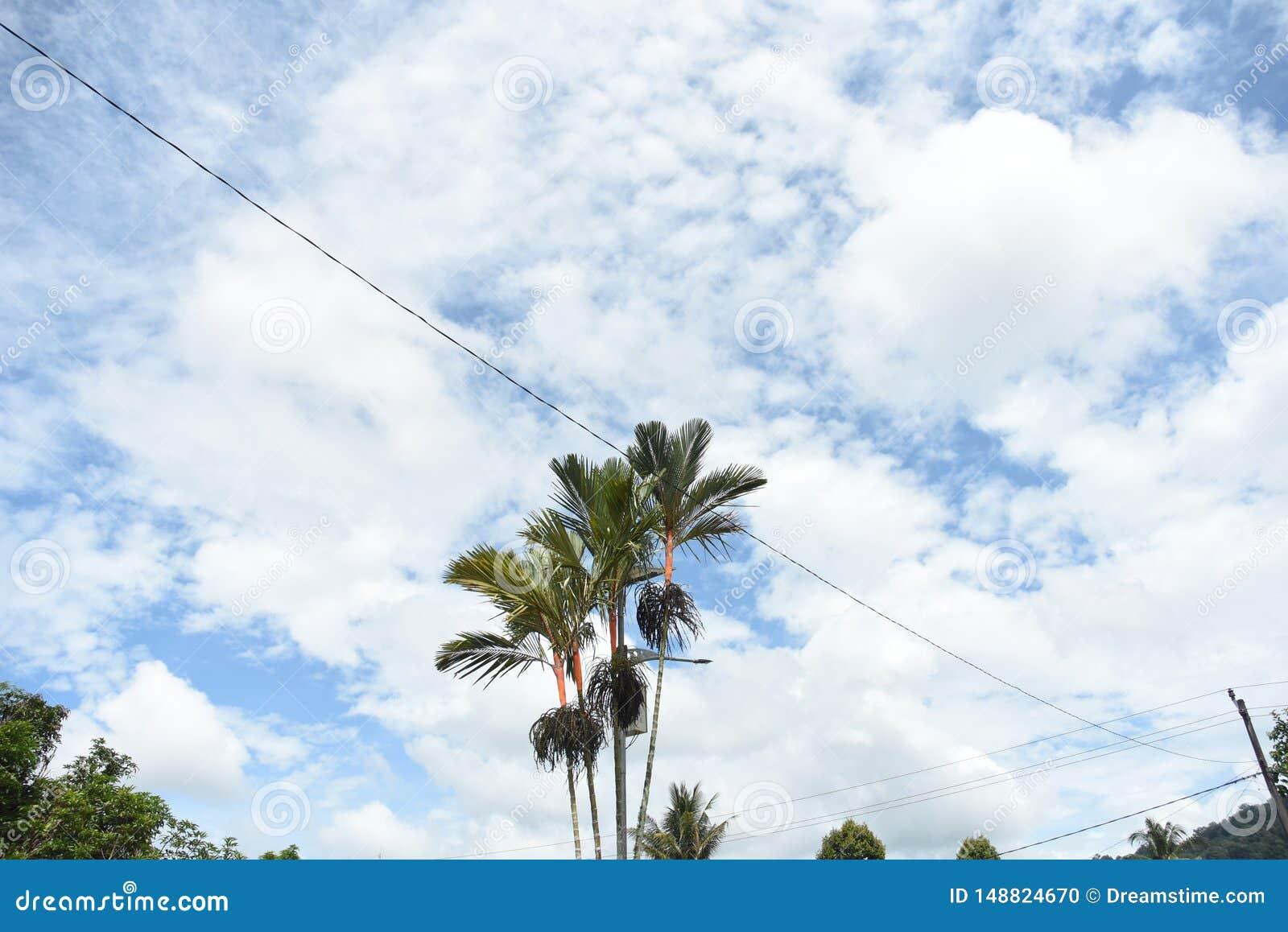 Ουρανός της Ινδονησίας, Pontianak