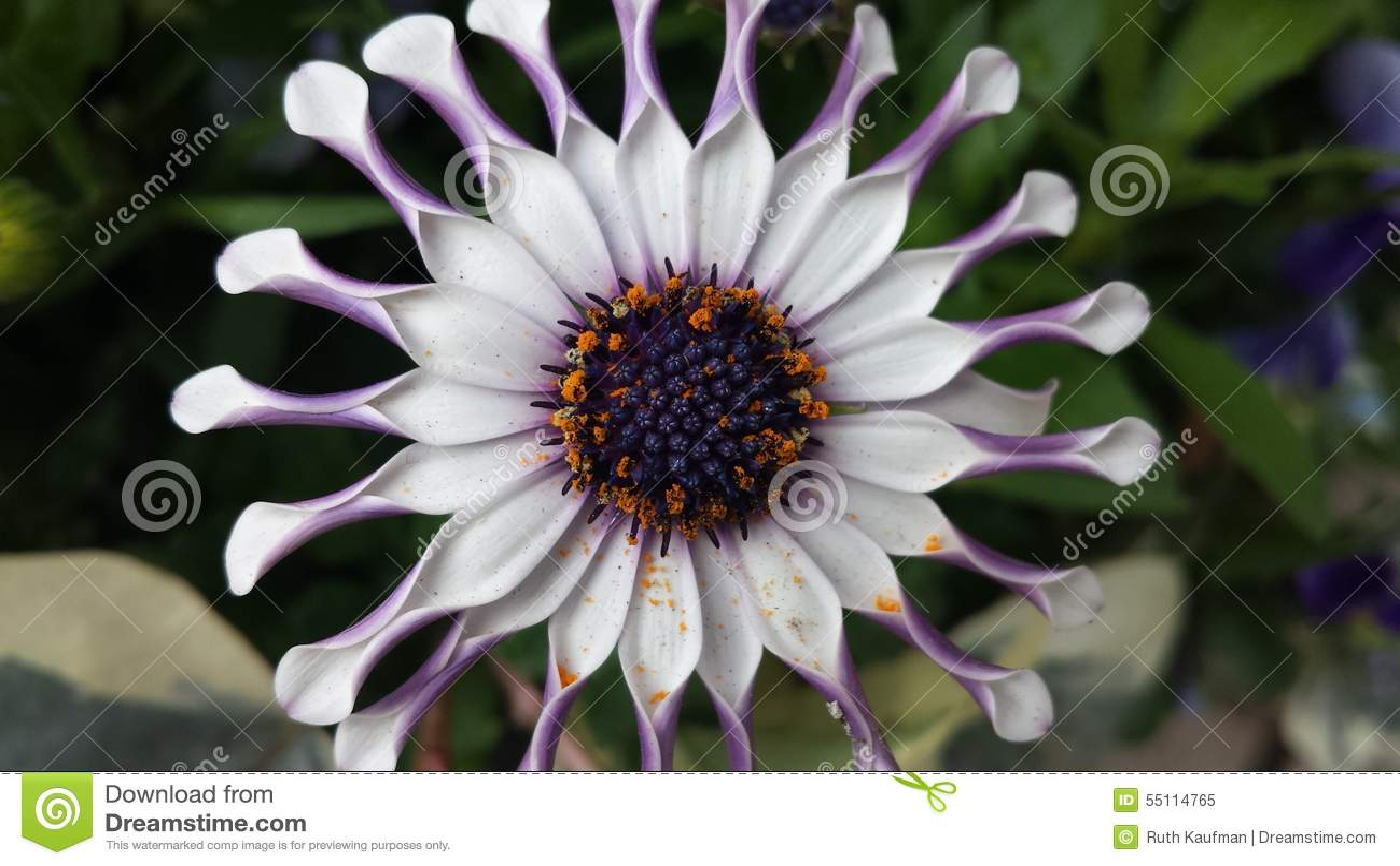 λουλούδι πανέμορφο