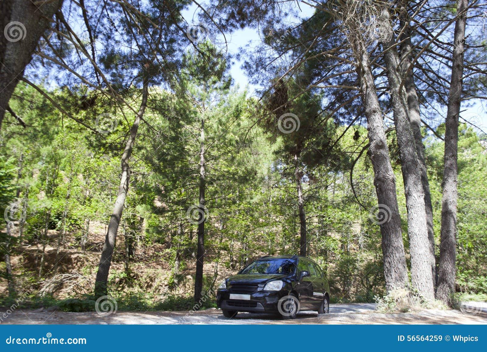 Download Οδήγηση από τις δασικές διαδρομές Στοκ Εικόνα - εικόνα από πεύκα, οροσειρά: 56564259