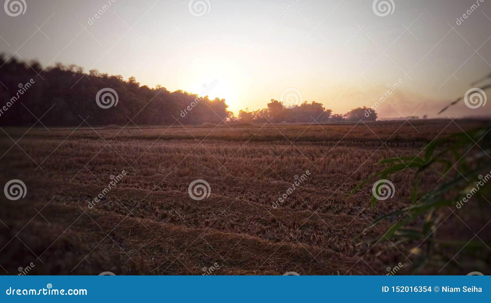 Ο ήλιος αυξάνεται στους συγκομισμένους τομείς ρυζιού