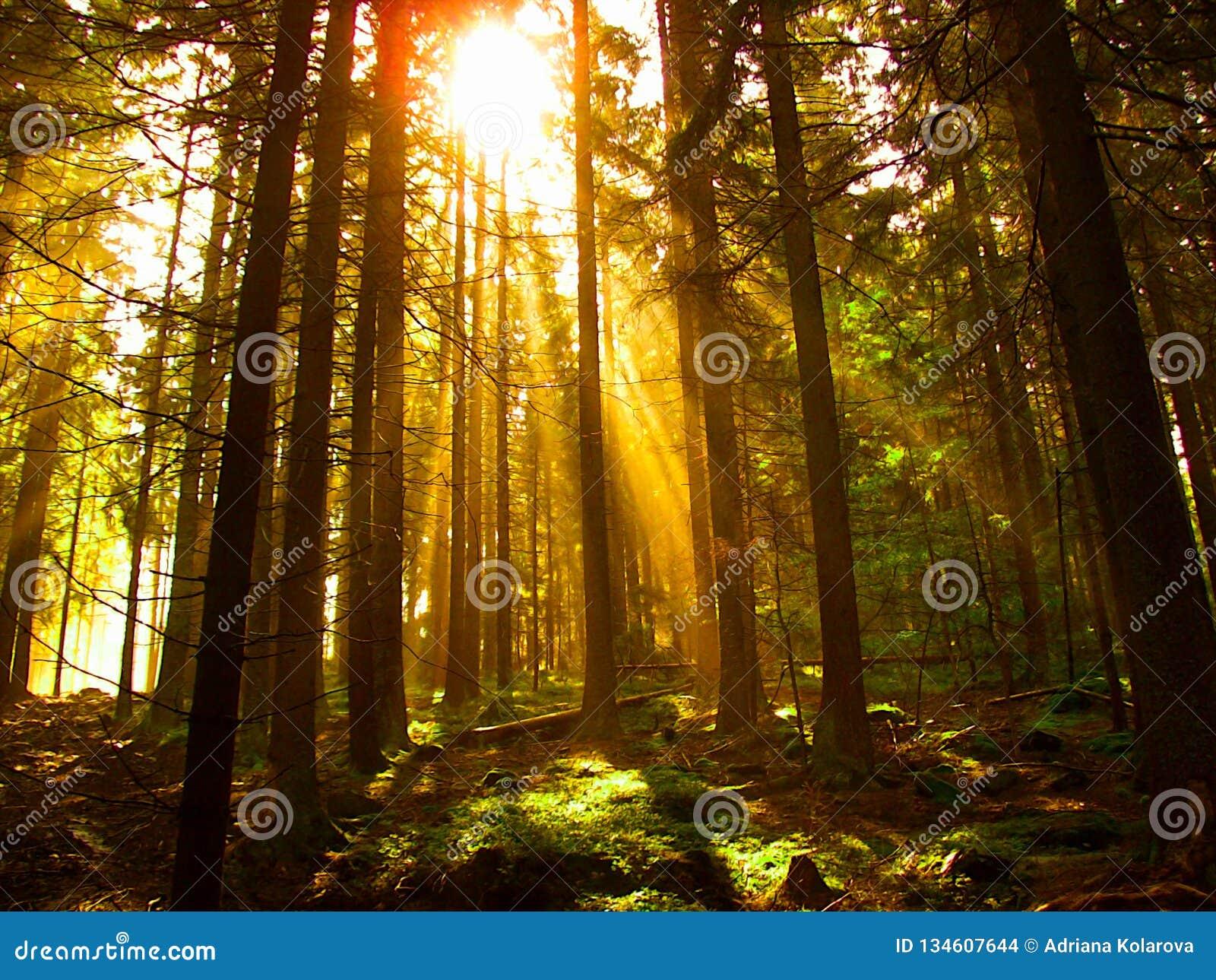 Ο ήλιος λάμπει μέσω των δέντρων στο δάσος