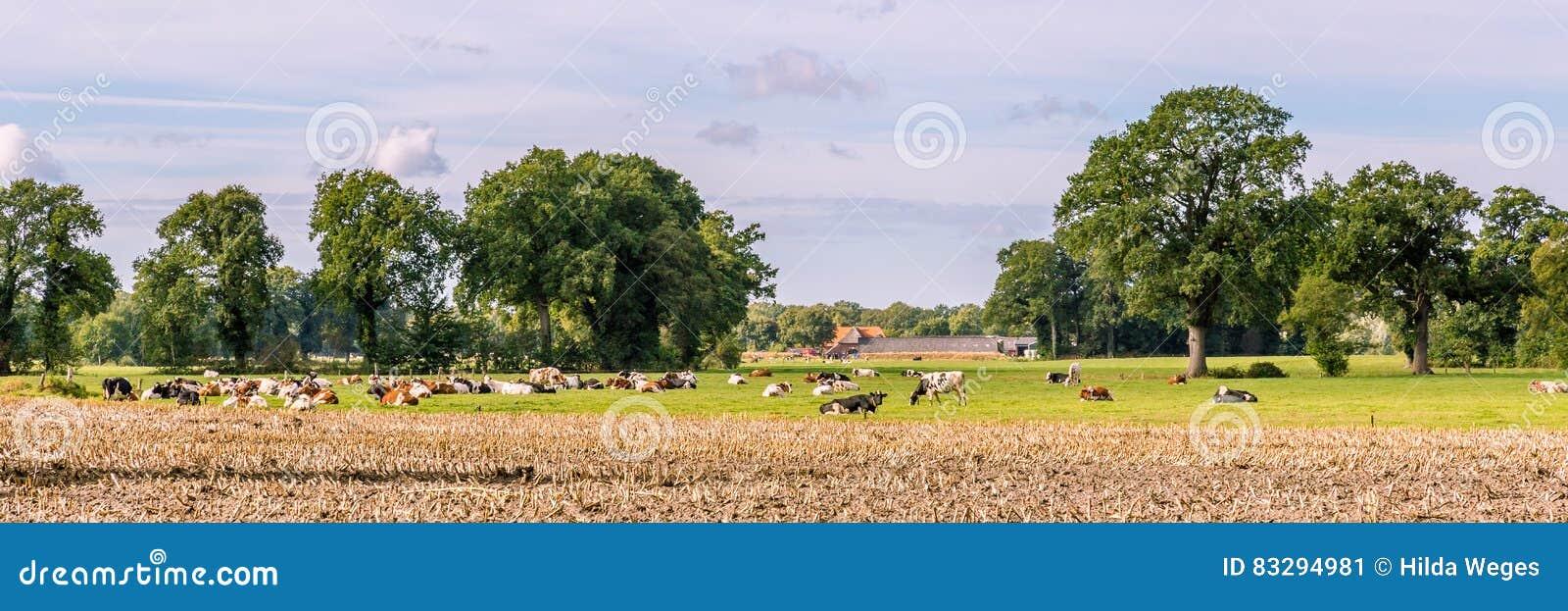 ολλανδικό τοπίο χαρακτηριστικό