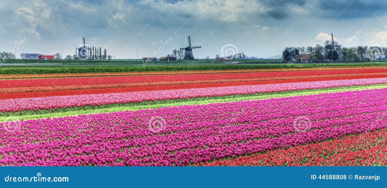 ολλανδικό τοπίο