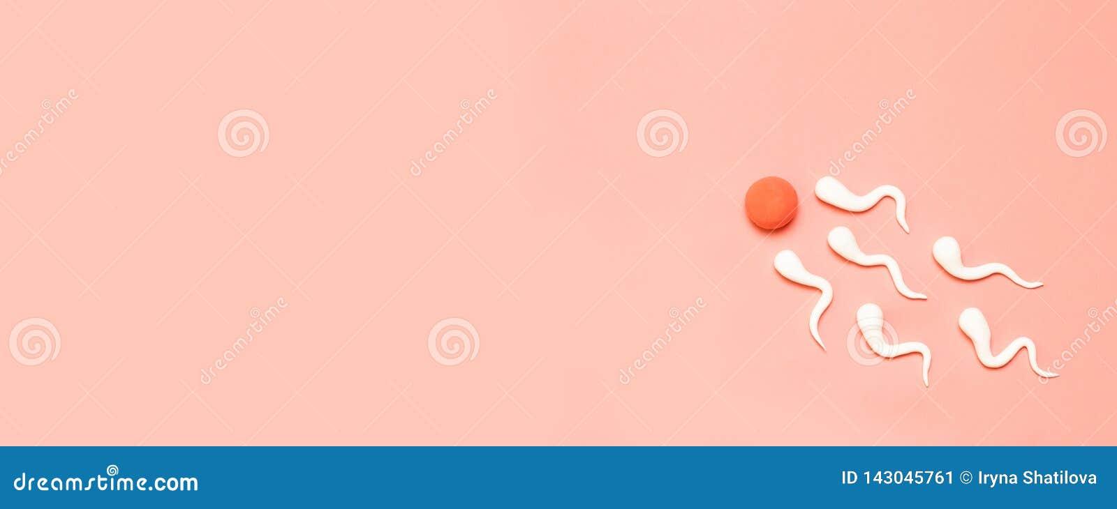 Ο αριθμός του ανθρώπινων σπέρματος και του ανθρώπινου ωαρίου