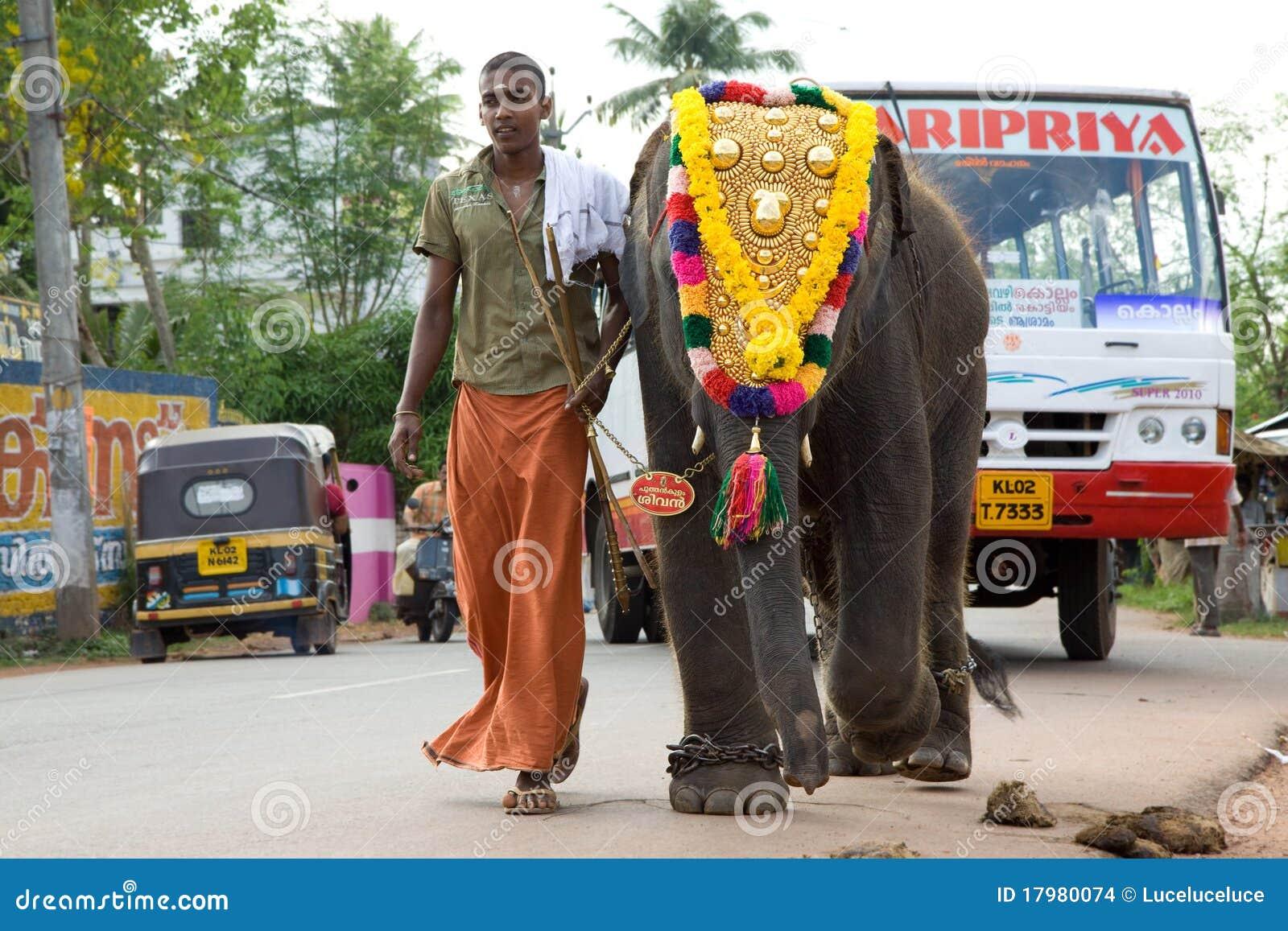ο ελέφαντας μωρών οδηγεί maho