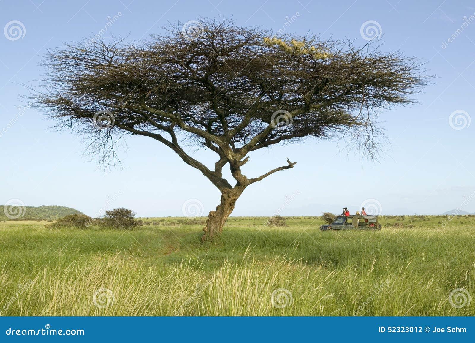 Οδηγοί σαφάρι Masai στο όχημα Landcruiser κάτω από ένα δέντρο ακακιών στη συντήρηση άγριας φύσης Lewa, βόρεια Κένυα, Αφρική