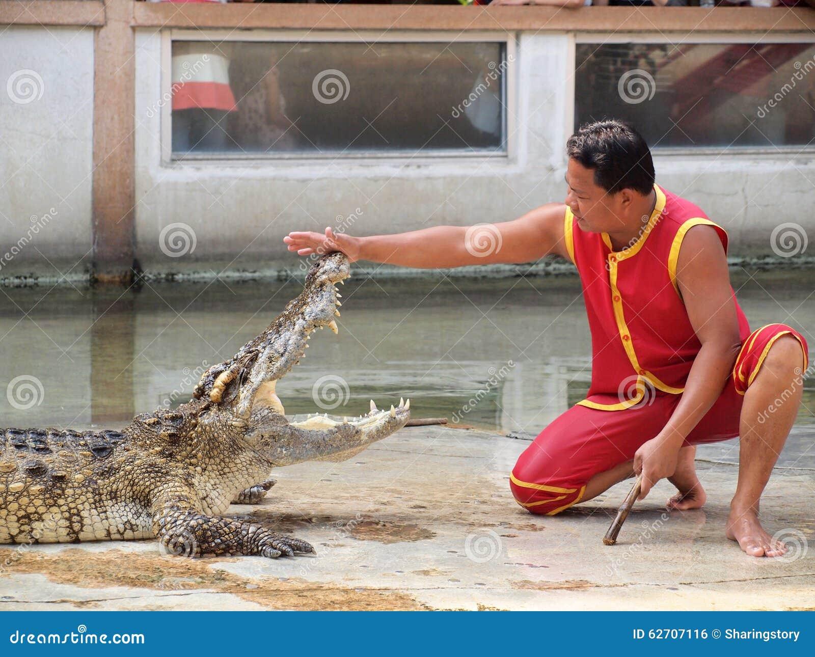 Ο κροκόδειλος παρουσιάζει στο αγρόκτημα κροκοδείλων