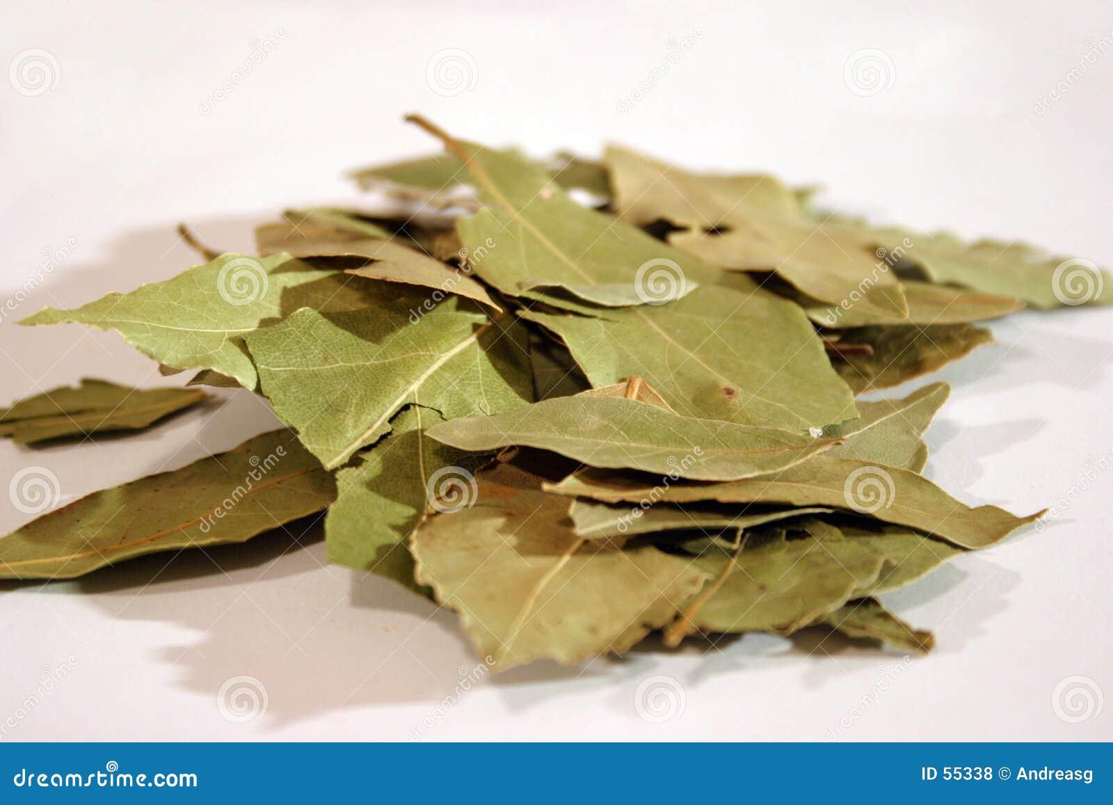 ο κόλπος βγάζει φύλλα