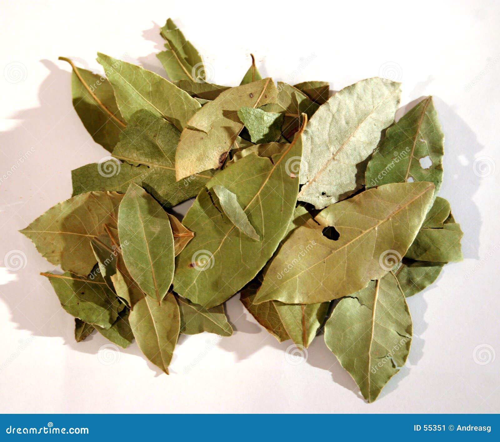 ο κόλπος 2 βγάζει φύλλα