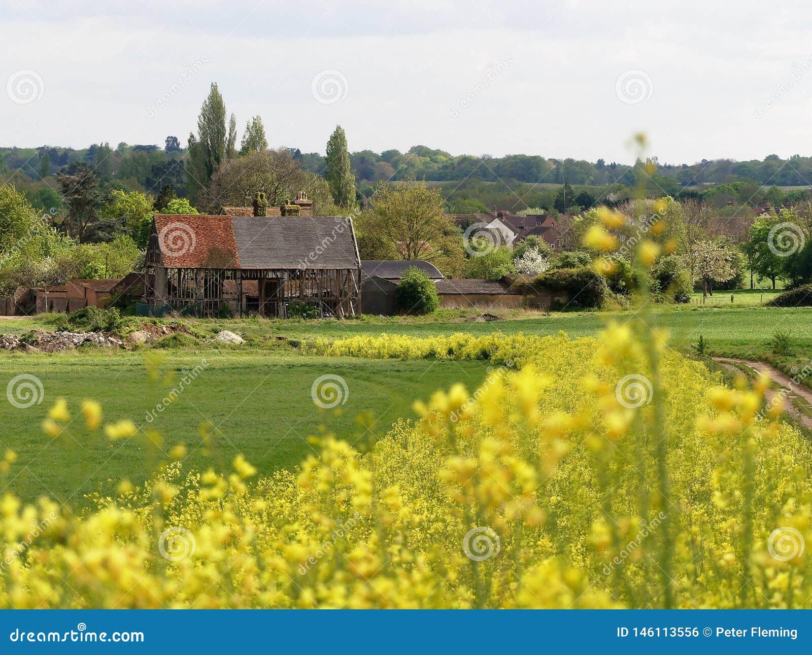 Ο μαύρος 16ος αιώνας σιταποθηκών, αγρόκτημα Woodoaks, σταυρός σφενδάμνου, Hertfordshire με το πρώτο πλάνο του θολωμένου κίτρινου