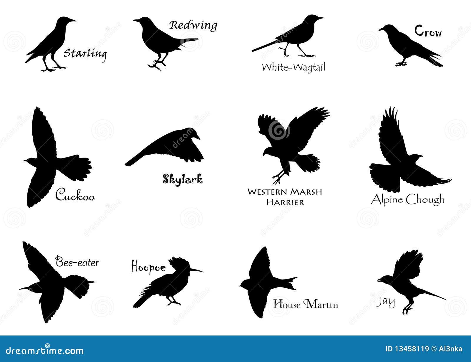 ο Μαύρος πουλιών