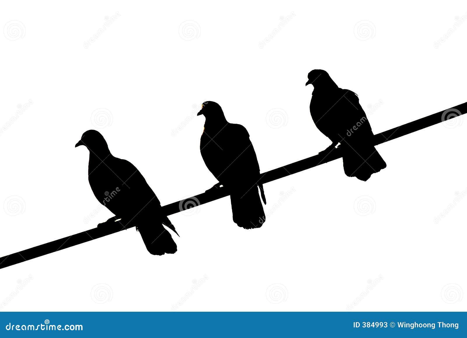 ο Μαύρος 3 πουλιών