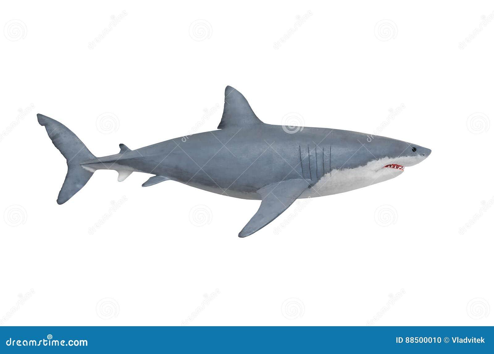 Ο μεγάλος άσπρος καρχαρίας