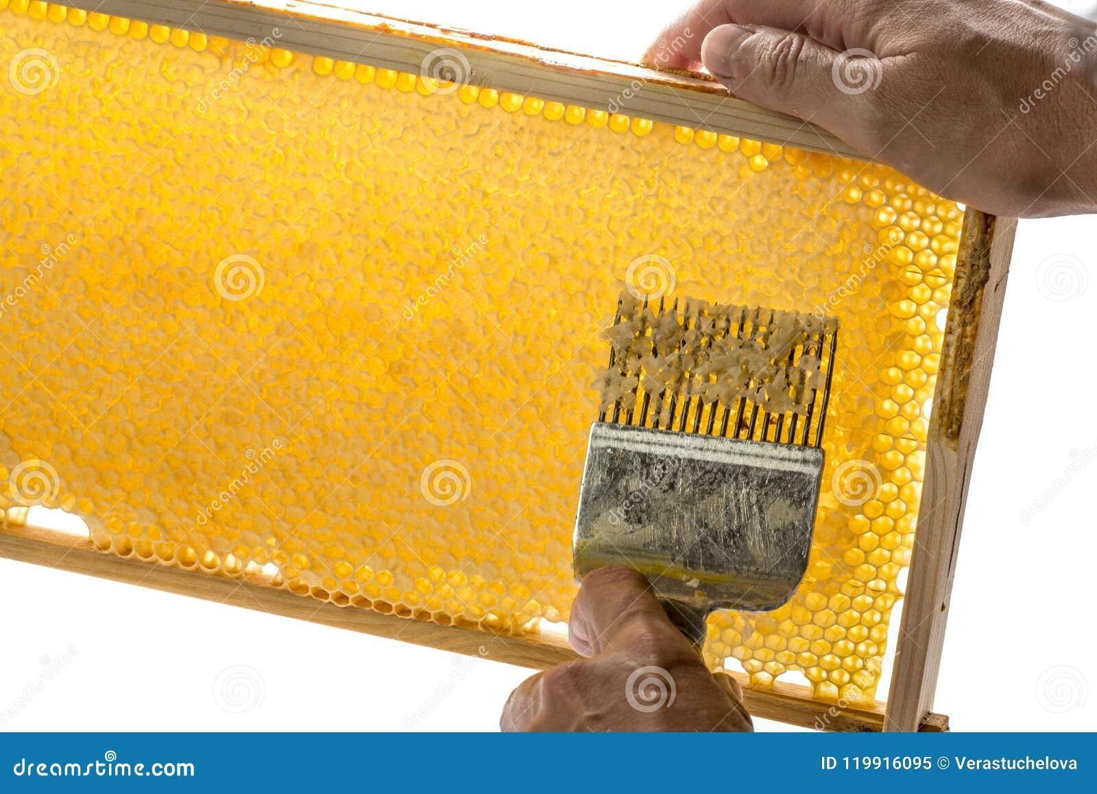 Ο μελισσοκόμος εκπωματίζει την κηρήθρα