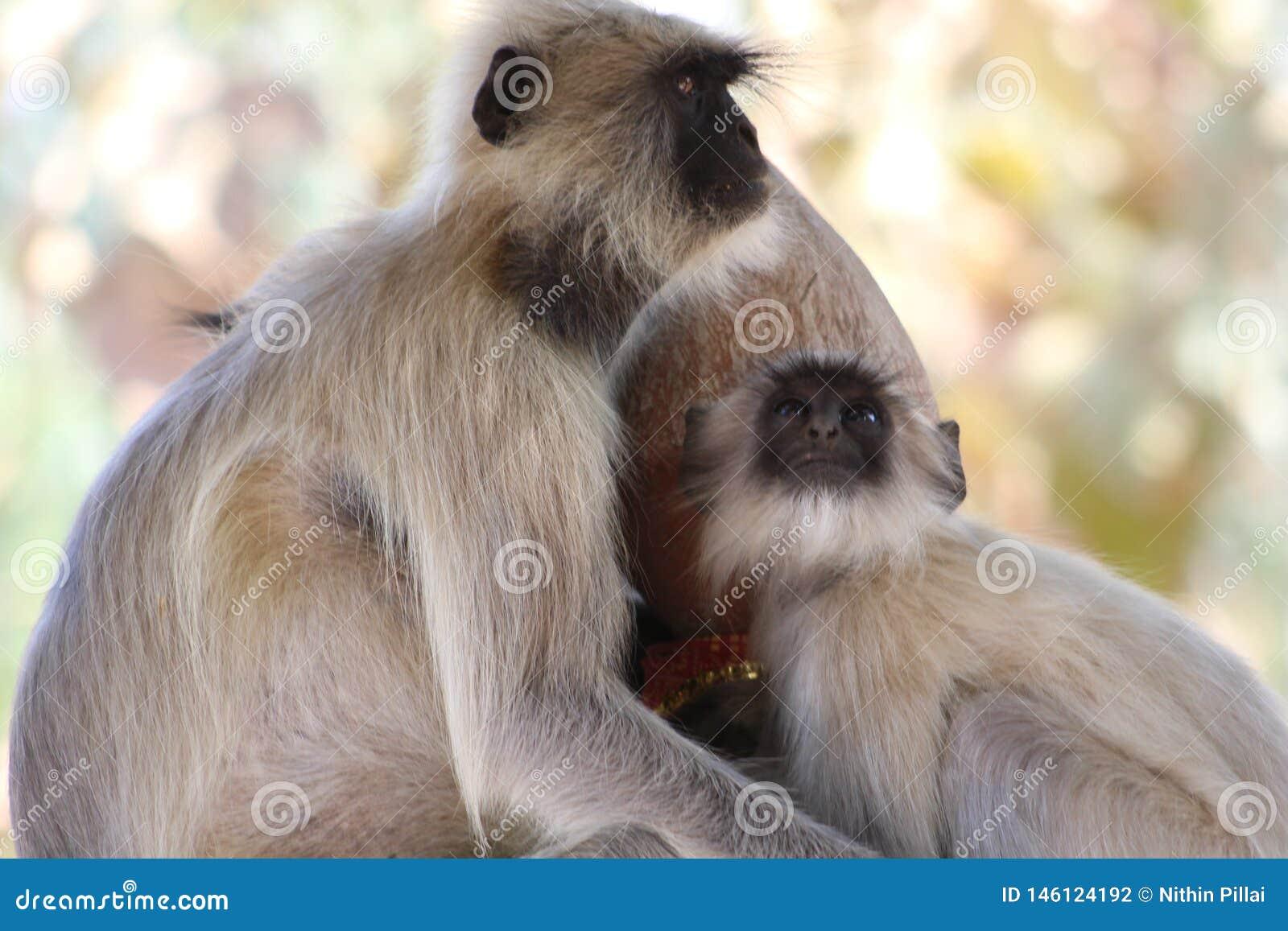 Ο πίθηκος θέτει με τη διαφορετική κατεύθυνση σε ένα πλαίσιο