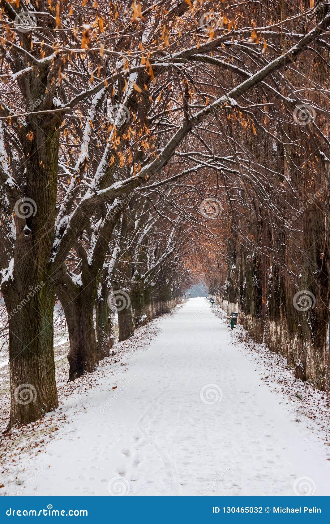 Ο περισσότερο ευρωπαϊκά η αλέα το χειμώνα