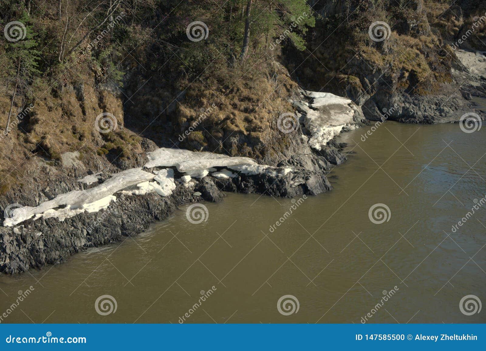 Ο ποταμός Katun βουνών την άνοιξη, τρεξίματα στο πόδι των βουνών Altai, κατά μήκος της ακτής βρίσκεται χιόνι Altai, Σιβηρία, Ρωσί