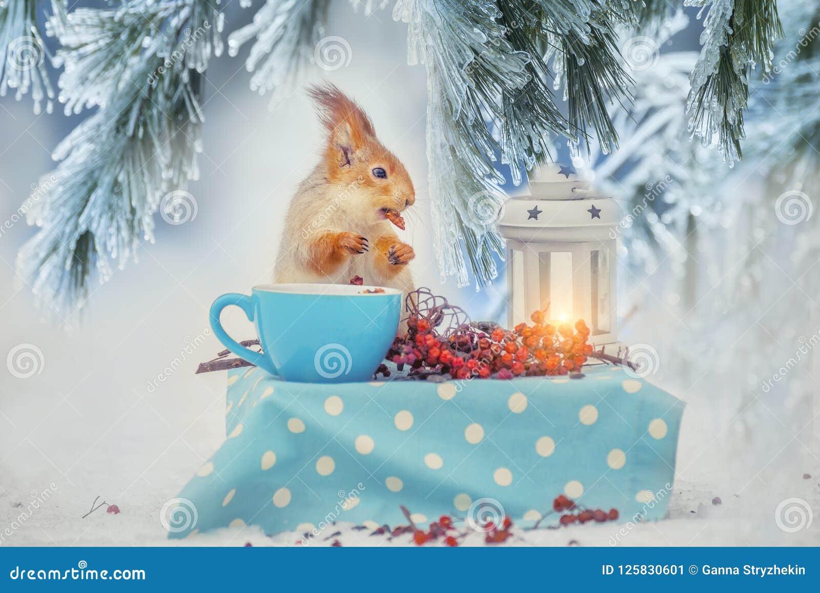 Ο σκίουρος στον πίνακα τρώει τα καρύδια από ένα φλυτζάνι σε ένα δασικό χειμερινό ξέφωτο Δασική χειμερινή εικόνα παραμυθιού