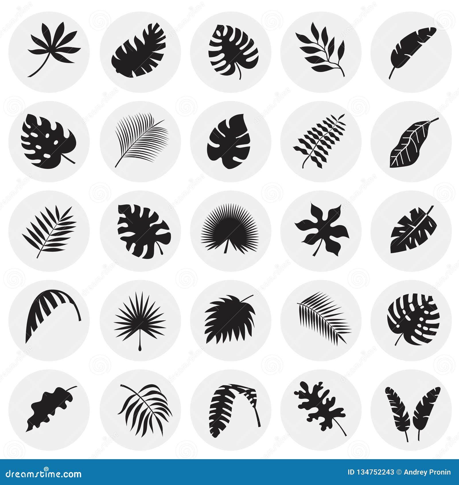 Ο τροπικός κύκλος βγάζει φύλλα τα εικονίδια που τίθενται στο υπόβαθρο κύκλων για το γραφικό και σχέδιο Ιστού, σύγχρονο απλό διανυ