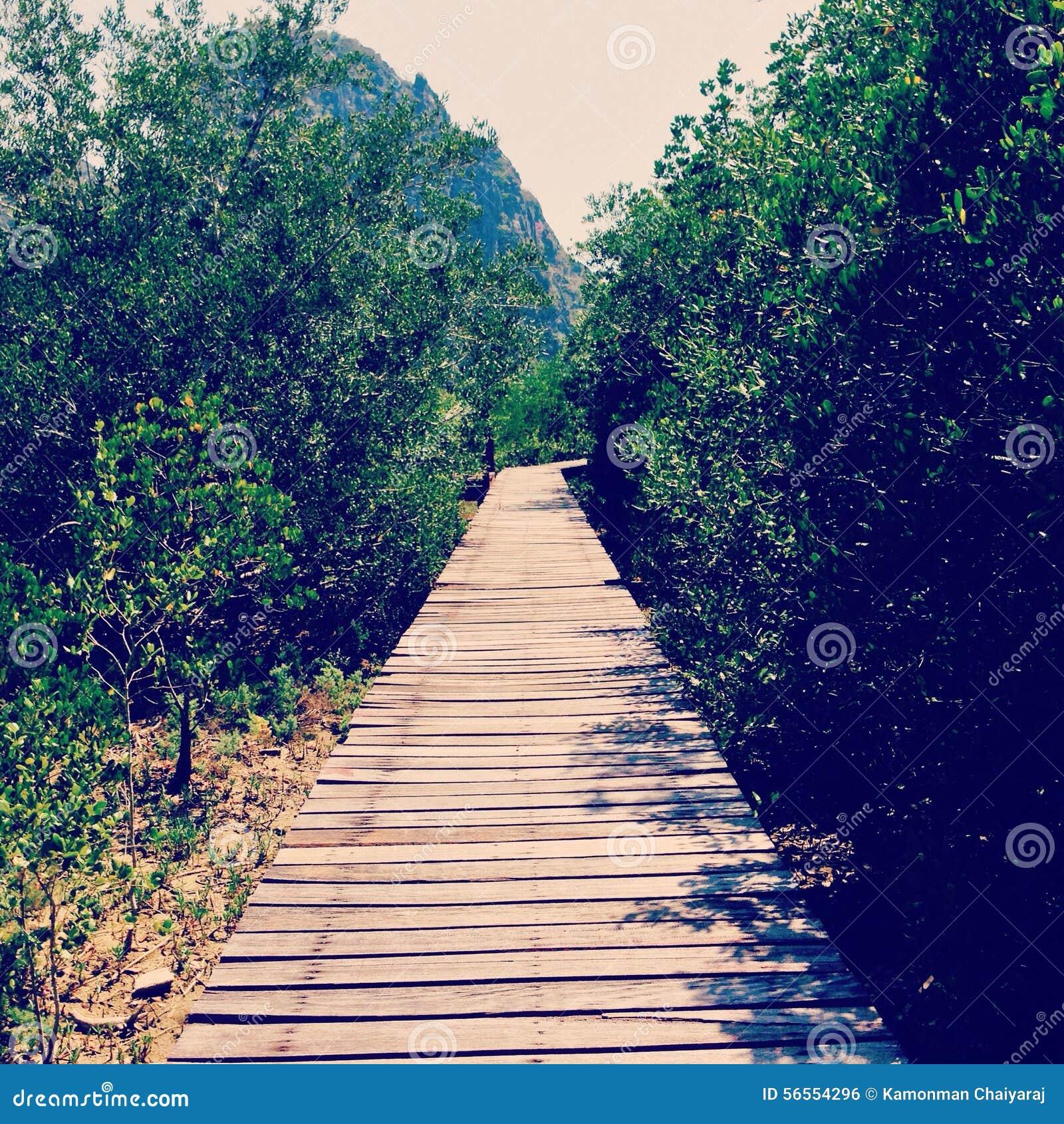 Download ο τρόπος μου στοκ εικόνες. εικόνα από δέντρο, πράσινος - 56554296