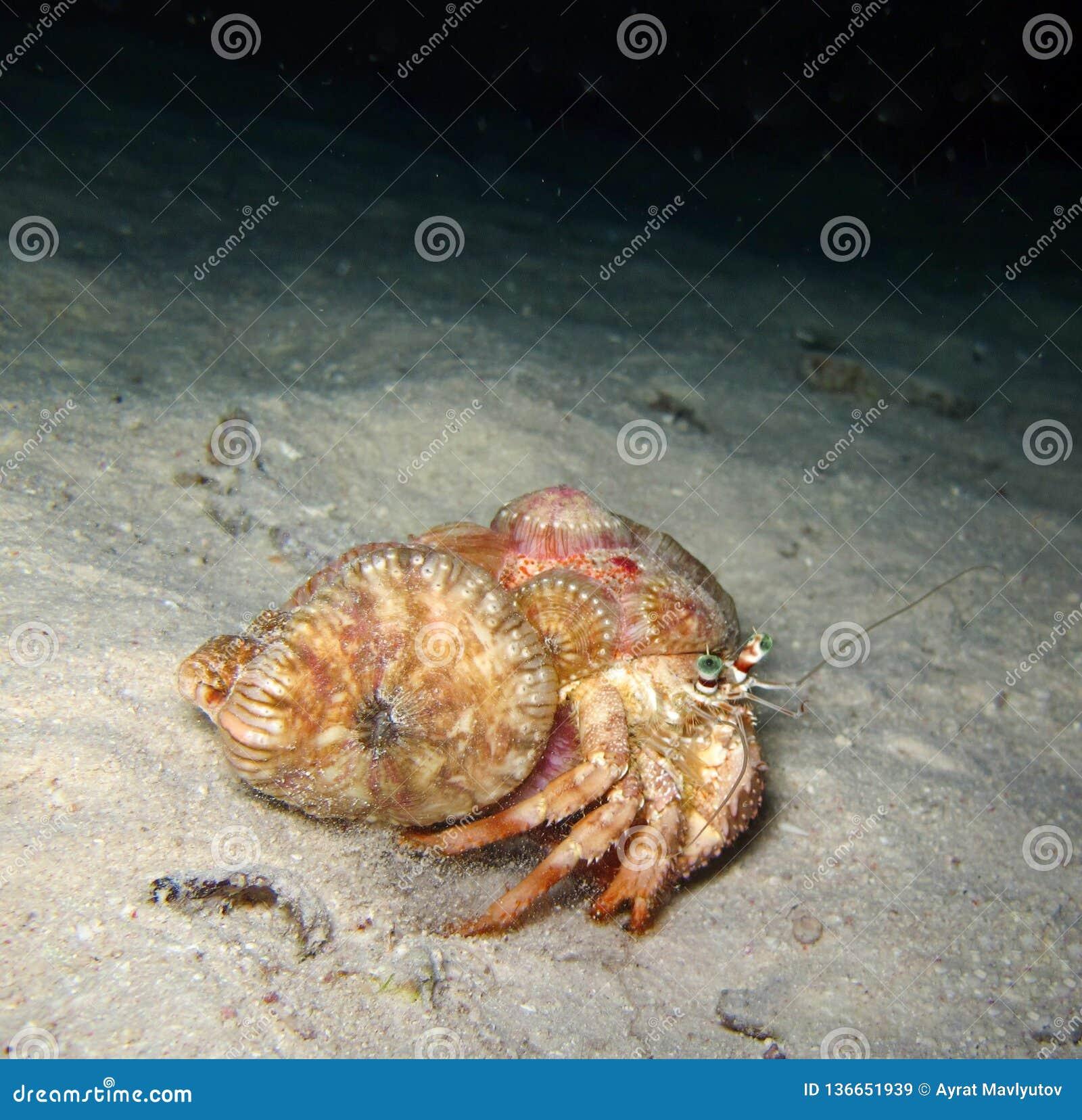 Ο υποβρύχιος κόσμος στα βαθιά νερά στην κοραλλιογενή ύφαλο και τις εγκαταστάσεις ανθίζει τη χλωρίδα στην μπλε παγκόσμια θαλάσσια