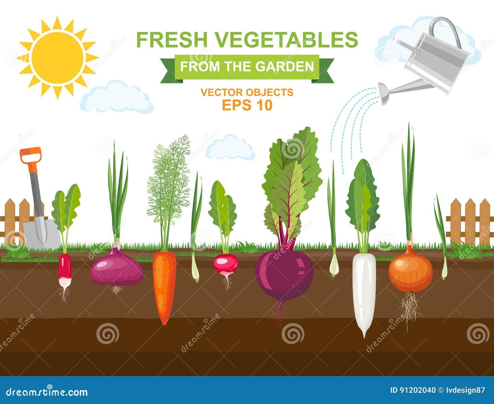 Ο φυτικός κήπος άνοιξη με τη διαφορετική καλή ρίζα veggies και ποτίζοντας μπορεί