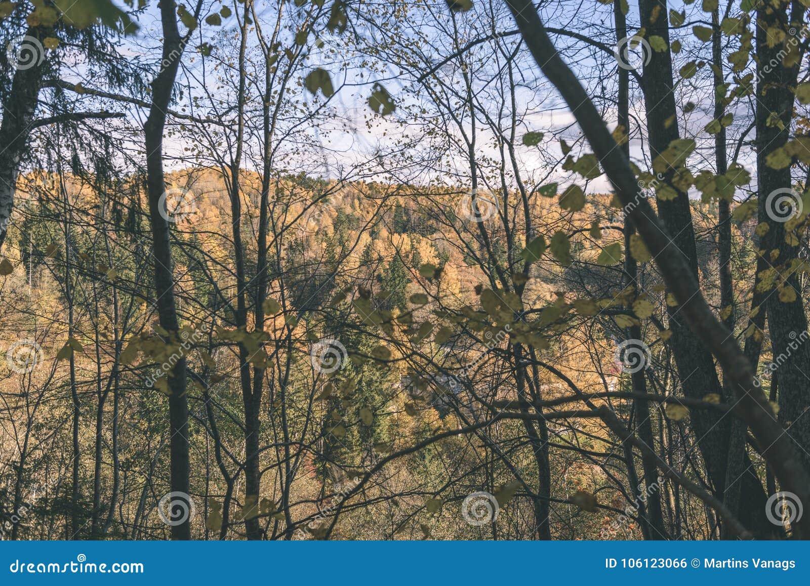 ο χρυσός φθινοπώρου χρωμάτισε τα φύλλα στο φωτεινό φως του ήλιου - εκλεκτής ποιότητας αναδρομικό FI