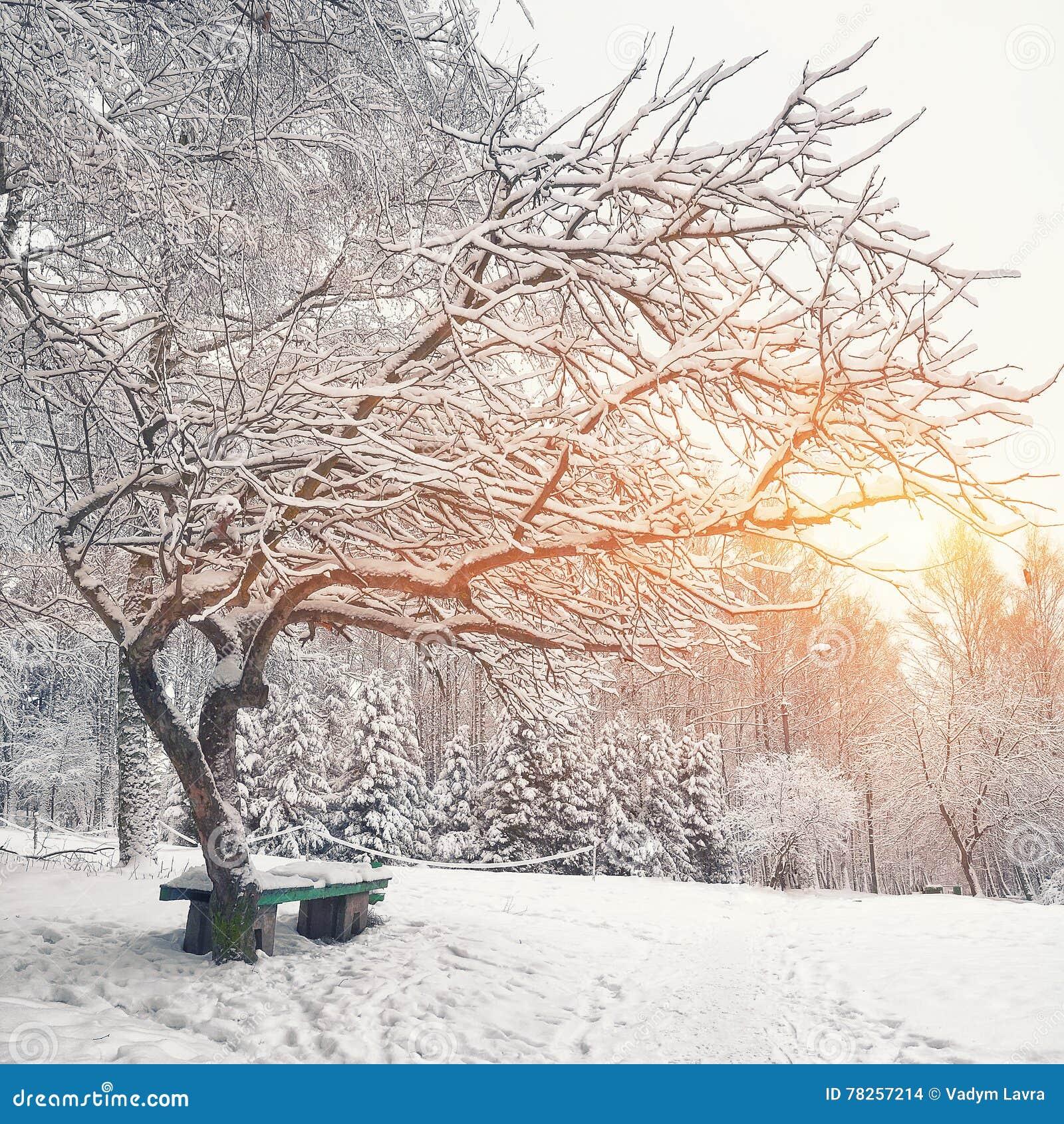 Πάγκος και δέντρα πάρκων που καλύπτονται από τη ισχυρή χιονόπτωση