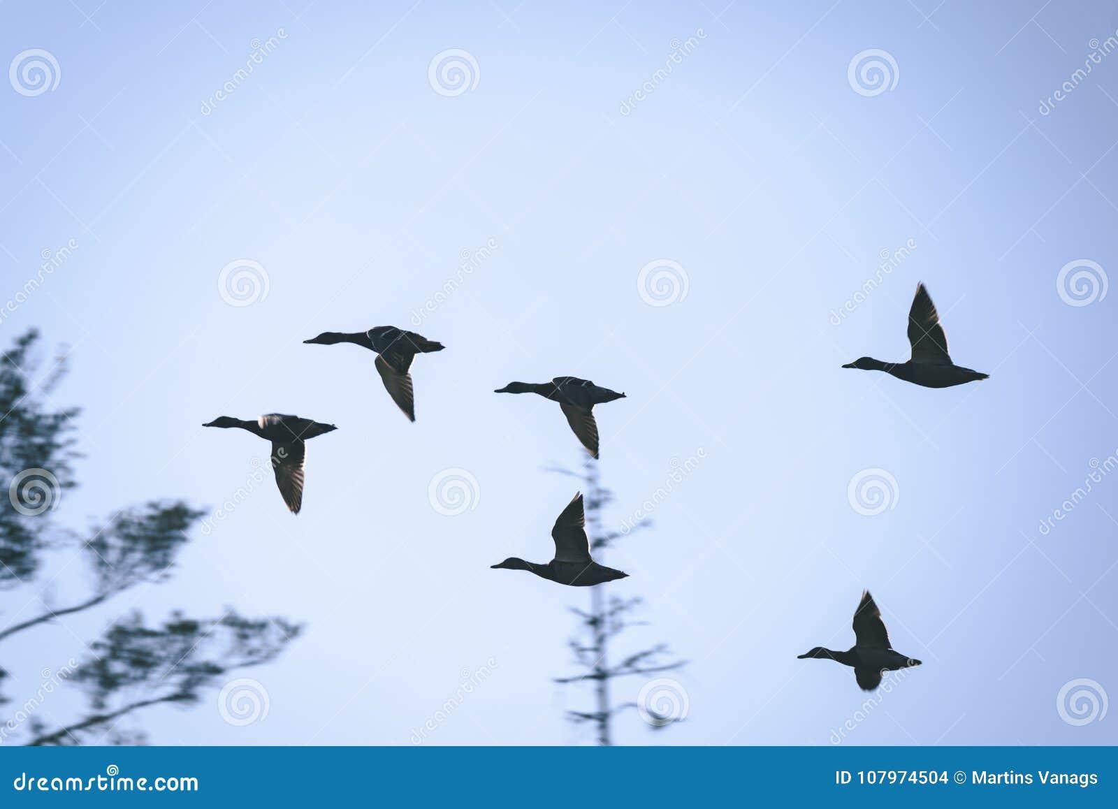 Μαύρο πουλί ταινία