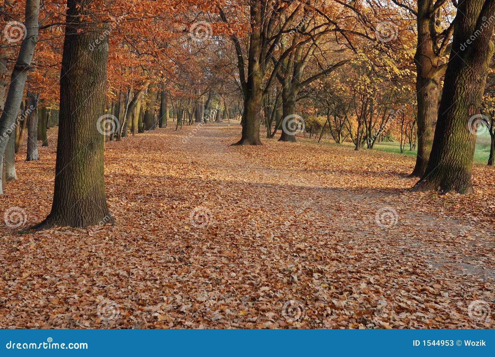 πάρκο πτώσης φθινοπώρου