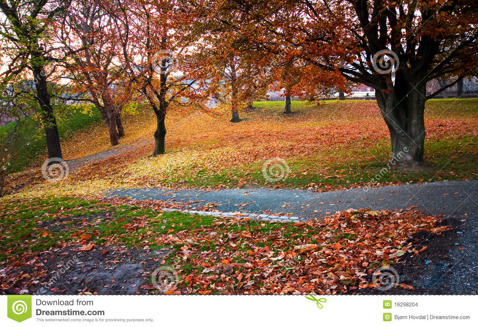Download πάρκο φθινοπώρου στοκ εικόνες. εικόνα από δέντρο, πορτοκάλι - 16298204