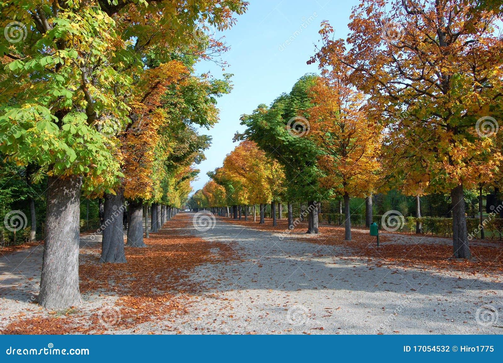πάρκο φθινοπώρου