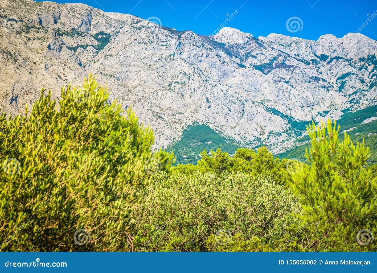 Πάρκο φύσης βουνών Biokovo και δέντρα από Makarska Riviera, Δαλματία