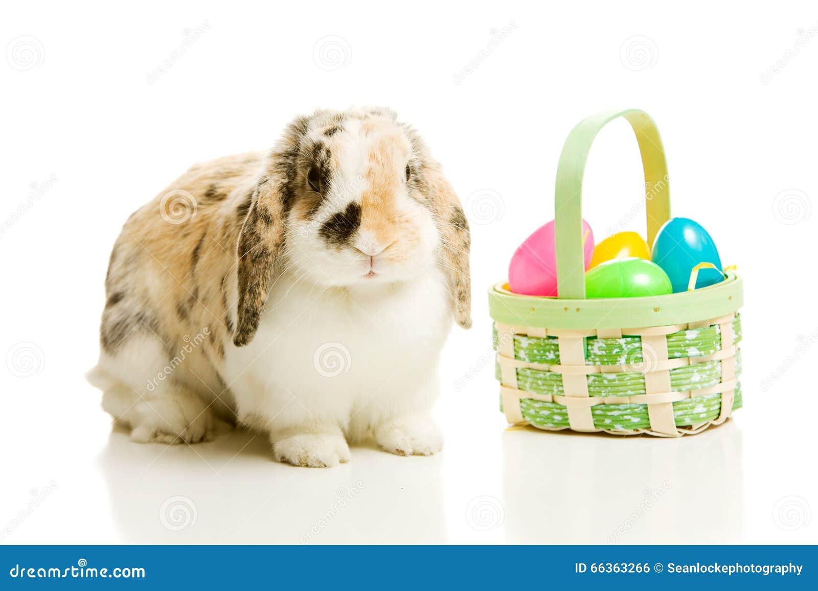 Πάσχα: Λαγουδάκι στο λευκό με το καλάθι των πλαστικών αυγών