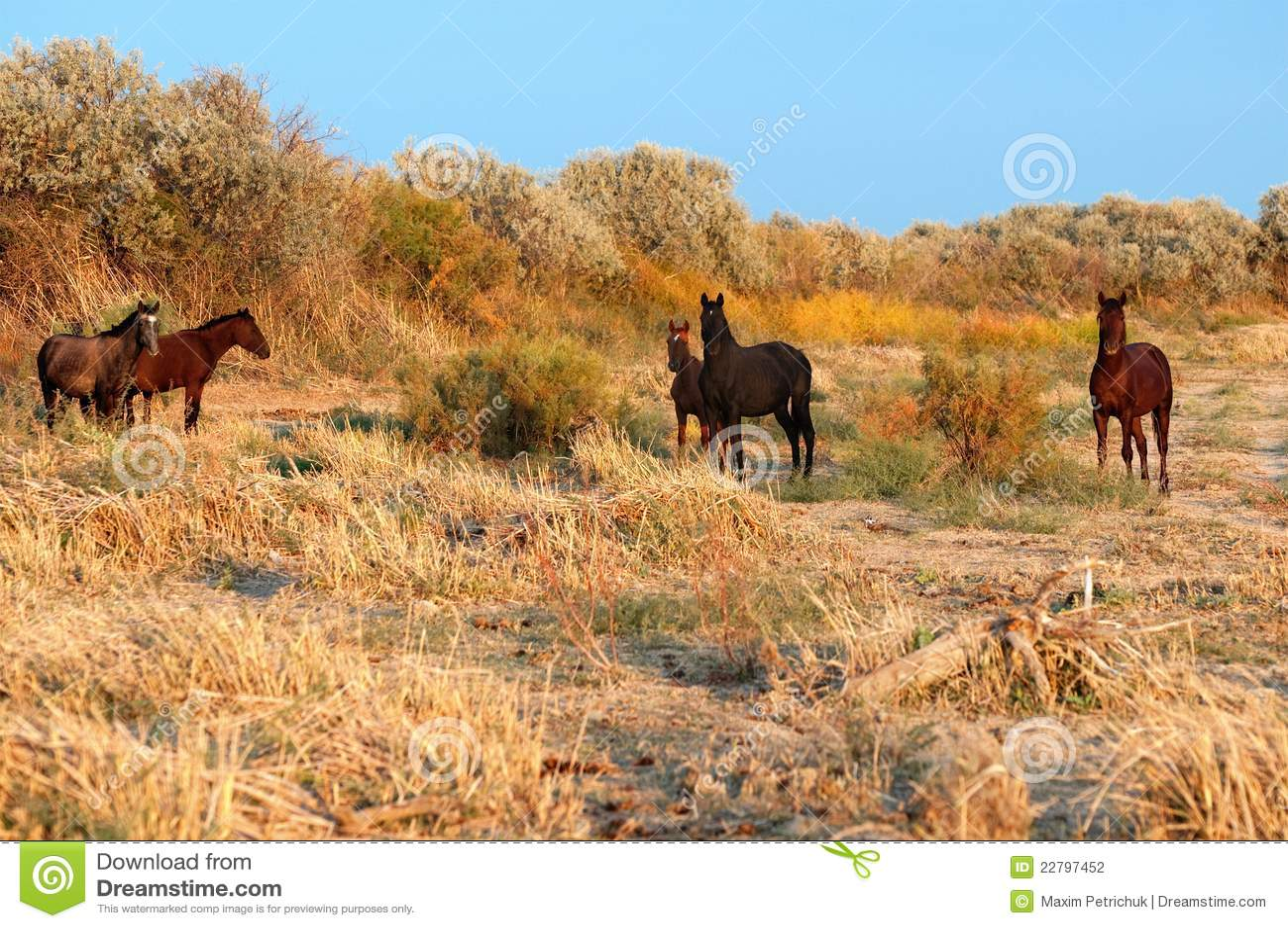 πέντε άλογα
