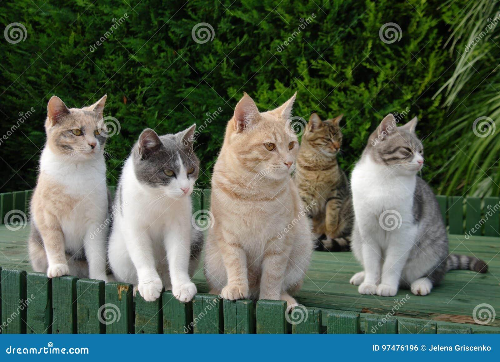 Πέντε ζωηρόχρωμες γάτες αναμονής