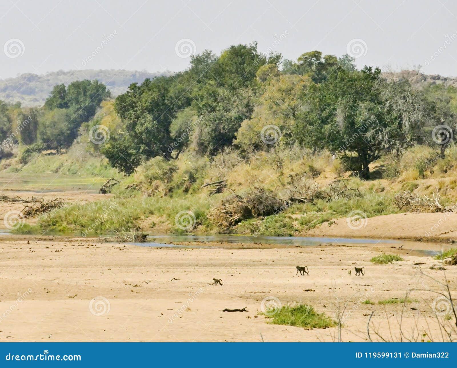 Πέρασμα ποταμών Limpopo το τοπίο ερήμων του έθνους Mapungubwe