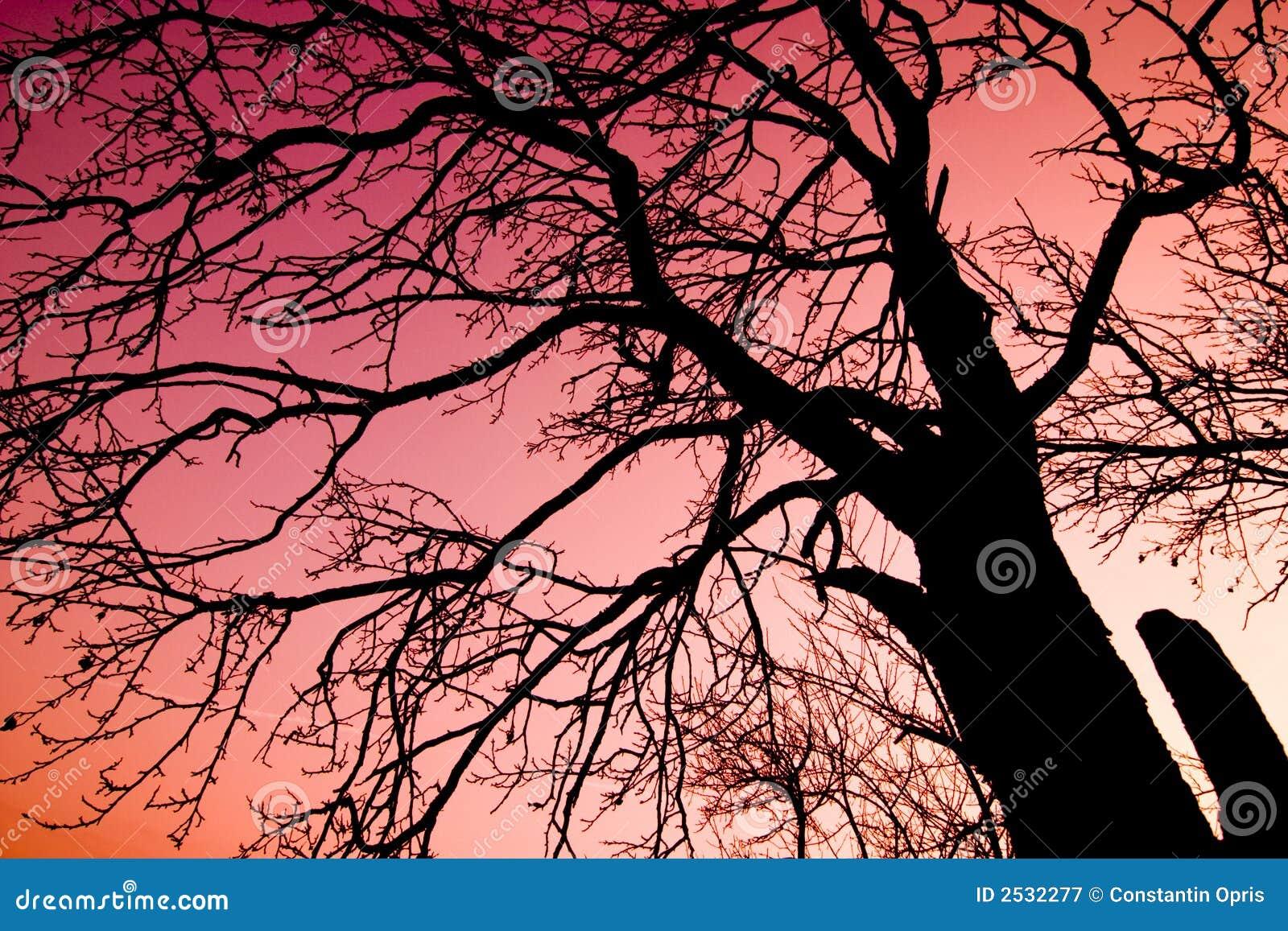 πέρα από το κόκκινο δέντρο ο&