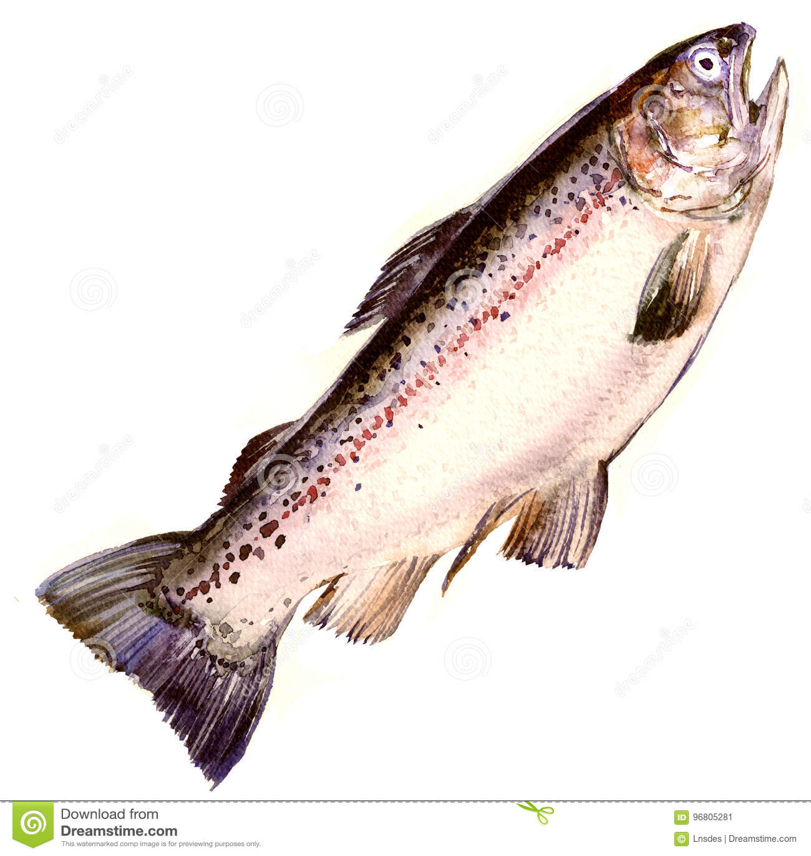 Πέστροφα ουράνιων τόξων, ψάρια σολομών που απομονώνονται, απεικόνιση watercolor στο λευκό