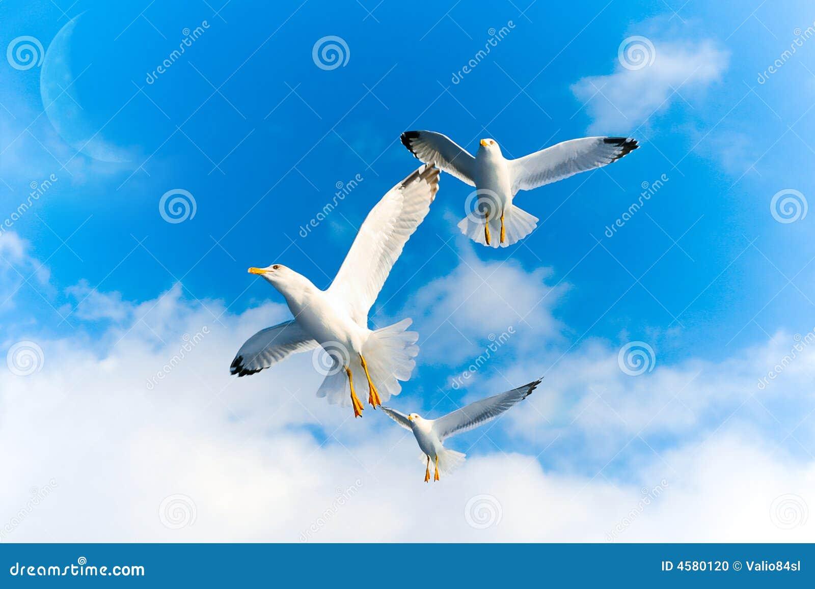 Πουλιά που πετούν τον ουρανό mr no pr no 5