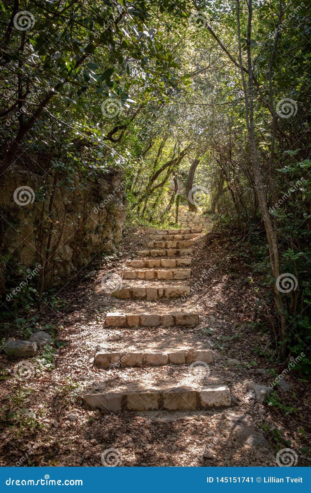 Πέτρινα σκαλοπάτια σε ένα δάσος σε Mlini, Κροατία