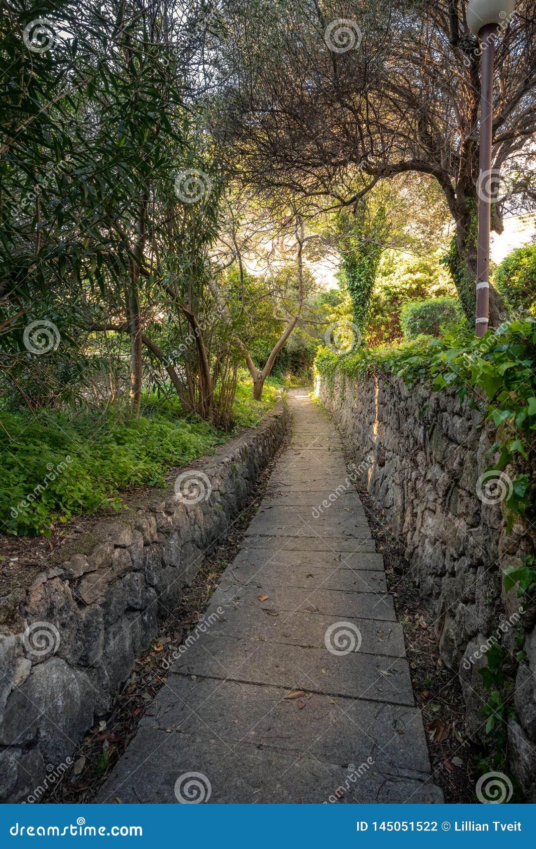 Πέτρινη πορεία διάβασης πεζών σε ένα δάσος σε Mlini, Κροατία